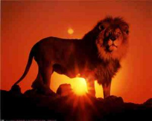 1180_lion-at-sunset-posters.jpg